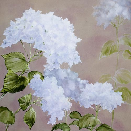 Hydrangea - Early Blossoms
