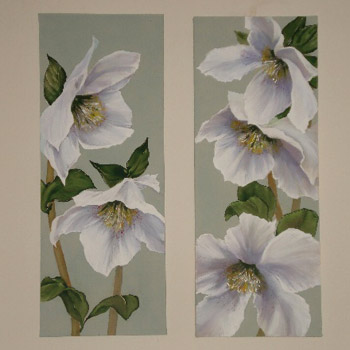 White Anemonies - Prints on Canvas